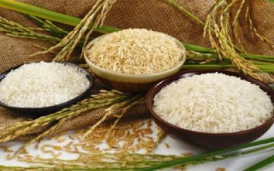 Xuất khẩu gạo tăng mạnh chủ yếu nhờ Trung Quốc